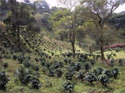 Бразилия стала инвестиционной за счет хорошего кофе