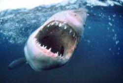Экологи в Мексике протестуют против уничтожения акул