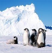 Озоновая дыра защищает Антарктиду от глобального потепления