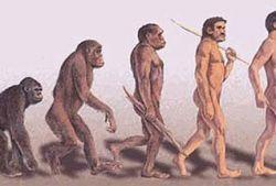 Новые открытия в теории эволюции человека