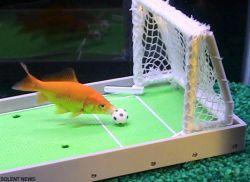 Американец обучает обитателей домашних аквариумов невероятным трюкам (видео)