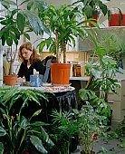Больше растений в офисе - меньше больничных