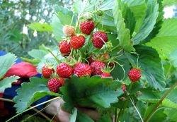 """Что за фрукт \""""экологический продукт\""""?"""