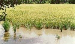 Циклон в Мьянме оставит мир без риса