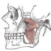 Французские учёные создали искусственный рот