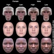 Красивые люди живут дольше