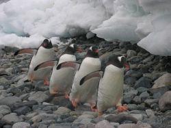 Книжку про пингвинов-геев изгоняют из американских школ