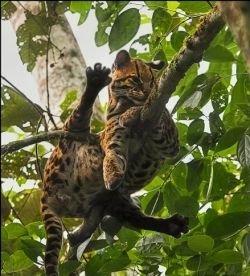 Джунглям Амазонки угрожает чистый воздух