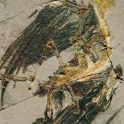 Найдена ещё одна птица эпохи динозавров