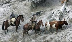 Сотни животных брошены в заваленном пеплом городе