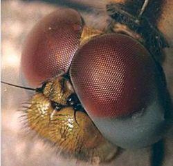 Разработаны датчики, моделирующие зрение насекомых