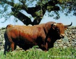 Россия начнет импортировать племенной скот из США