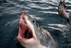 Сингапурские молодожены уничтожают акул