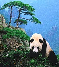 В Китай пока лучше не ездить