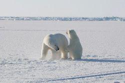 Площадь льдов Арктики этим летом сократится до минимального размера за все время наблюдений из космоса