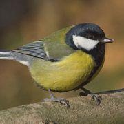 Птицы смогли приспособиться к глобальному потеплению