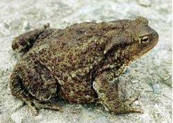 Тысячи жаб в провинции Цзянсу спасаются от неизвестного бедствия