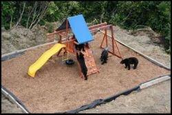 Как развлекаются медведи на Аляске (фото)
