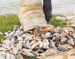 В Приморье задержали 80 тонн пойманной браконьерами рыбы