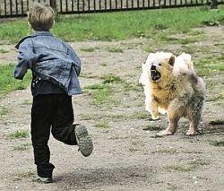 Москву захватили бездомные псы: справиться с ними уже никто не может