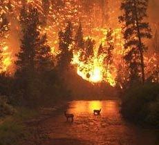 Площадь лесных пожаров в России за последние сутки выросла почти вдвое