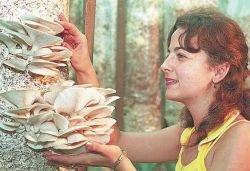 Лечение рака грибами: шанс излечиться или очередная трата времени?