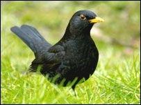Почему диких птиц нельзя кормить хлебом