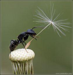 Техас захватили полчища бешеных муравьев