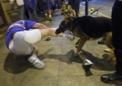 Полиция Манчестера натравливает собак на футбольных фанатов (фото)