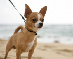 Названы самые дорогие в мире собаки
