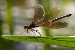 Раскрыт секрет полета стрекоз