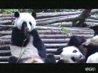 Подборка прикольных роликов с животными (видео)