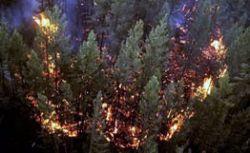 Количество лесных пожаров на Дальнем Востоке увеличилось в пять раз