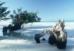 Через сто лет остров Занзибар исчезнет