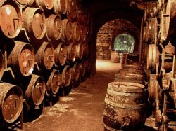 Итальянский бар агитирует за безалкогольное вино