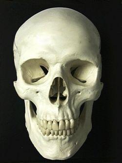 В Индонезии изъяли багаж с человеческими черепами