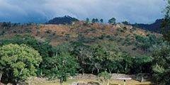 Три государства Центральной Америки будут сообща управлять заповедником