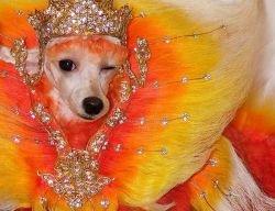Собачий боди-арт (фото)