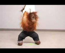 Levi\'s запустил вирусный ролик с обезьяной (видео)