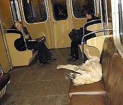 Собачья жизнь в московском метро