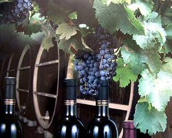 Молдавские виноделы вернулись в Россию. Почему они ведут себя на нашем рынке так пассивно?