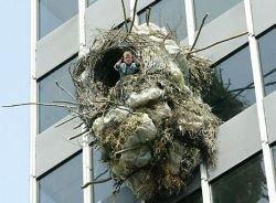 Человек, живущий в гнезде (фото)