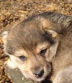Одна бродячая собака обходится казне в 50 тысяч рублей в год