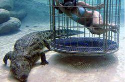 В Южной Африке предлагают тесно пообщаться с крокодилами (фото)