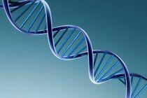 Клинические испытания доказали безопасность генной терапии импотенции