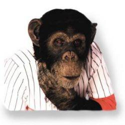 """Правозащитники требуют признать шимпанзе \""""личностью\"""""""