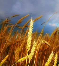 Мир потратит 1 трлн. долларов на импорт еды