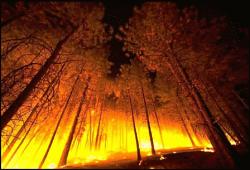 Лесной пожар в Калифорнии вышел из-под контроля