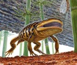 Найдено новое недостающее звено в эволюции земноводных