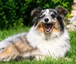 Енотовидная собака убила пенсионера